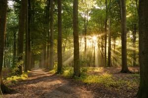 pratiques funéraires écologiques